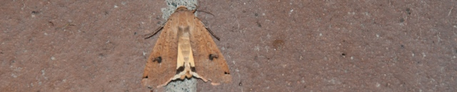 Moth on bricks