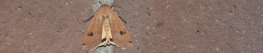 Moth on bricks