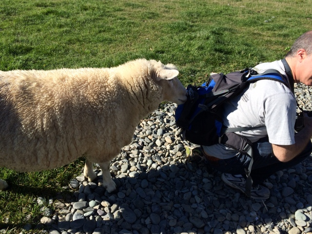 A sheep checking out the camera bag of yours truly in Athol, New Zealand.