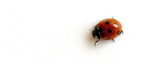 Ladybug_6D300